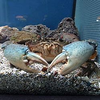 avatar.php?userid=7310467&size=small&timestamp=king-crab373