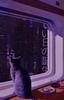 Lethargic Cats