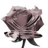 avatar.php?userid=4952071&size=small&timestamp=shinogun