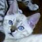 Mystic_Cat