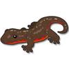 Bellied newt