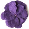 Violet Daffodil
