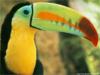 Songbird-O