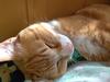 avatar.php?userid=6421715&size=small&timestamp=yakuyamosio