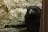 Crow-Baka