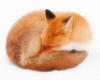 avatar.php?userid=5339680&size=small&timestamp=komiyafox