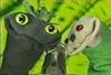 pidgeon_small