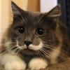 Professor Whiskers