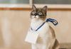 avatar.php?userid=4276776&size=small&timestamp=shu-yabiyabi