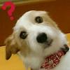 avatar.php?userid=2777325&size=small&timestamp=koikoi-rainy4l