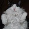 mop_cat