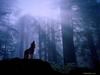 Wolf Ravensoul