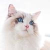 Dr White Cat