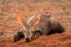 Aardvark Action