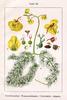 PM_Utricularia