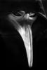 TheOwl67