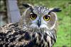 cry_owl