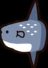 sunfish4956