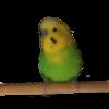 avatar.php?userid=4532283&size=small&timestamp=sen1118