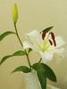 avatar.php?userid=4528099&size=small&timestamp=snowyuki