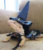 LizardWizard