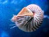 Nautilus98