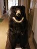 avatar.php?userid=4444247&size=small&timestamp=kumasuke