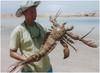 LobsterFist