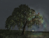 Treehero