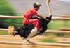 Associate Ostrich