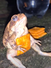 Agent Frog