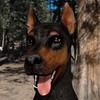 Watchdog79