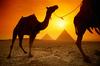 EgyptianKhalid