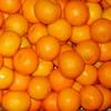 Orange_Headcrab