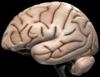 neurosci