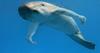 dolphinarms