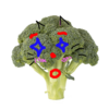 lilbbroccoli57