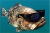 ShadyFish