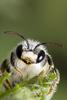BeesOnPhones