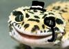 AnOddlyClassyGecko