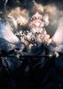 Holy_Darklight
