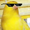 canaryfarmer