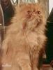 Bluen Catgod